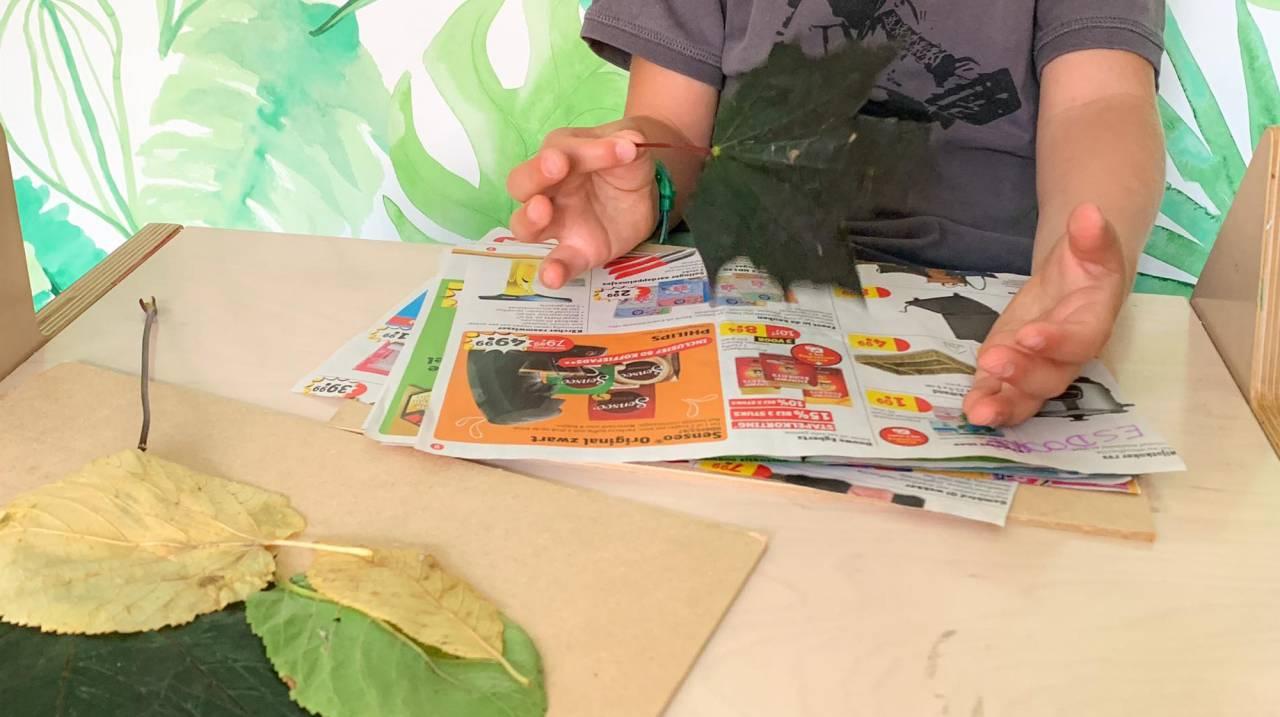 Leg de plantjes of bloempjes tussen papieren om te drogen