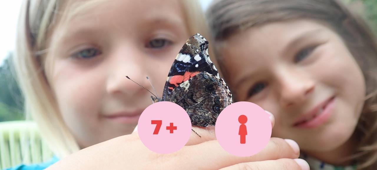 Vlinderzoekplaat